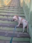 犬も飼い主も「お散歩」で一緒に認知予防!
