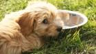 愛犬の水飲みをサポート!おすすめの商品と利用法