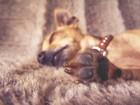 愛犬の肉球のひび割れケア方法