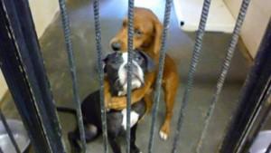 殺処分を待つ「抱き合う犬達」…1枚の写真が起こした奇跡