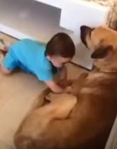 犬のお腹を押す子供