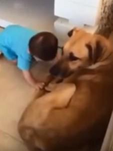 犬で遊ぶ子供