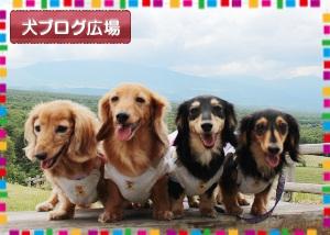 犬ブログ広場へ