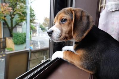 身を乗り出して外を眺める犬