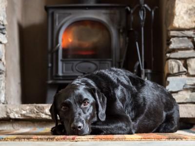 暖炉の前の犬