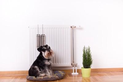 暖房器具の前のクッションに座る犬