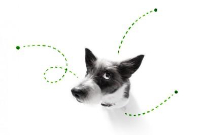 犬とノミのイメージ