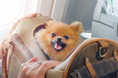 キャリーバッグから顔を出す犬