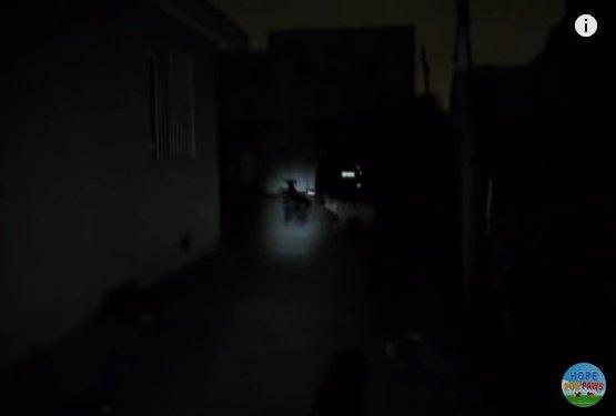 懐中電灯の光に浮かぶ犬