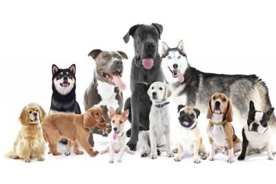 いろいろな犬種の犬たち