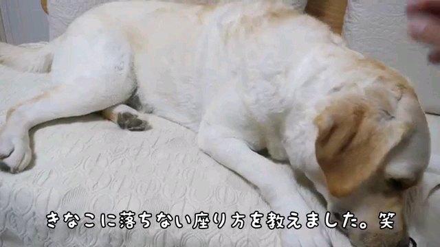 きなこに~字幕