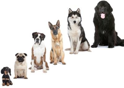 座った様々な大きさの犬たち