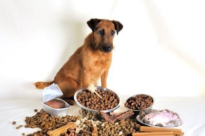 様々な種類のご飯の前で座る犬