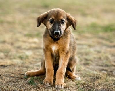 ぬいぐるみのような犬