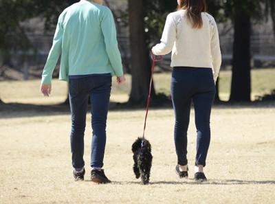 犬の散歩をする男女に後ろ姿