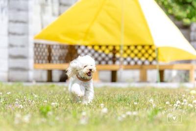 ホワイトガーデン ドッグラン写真