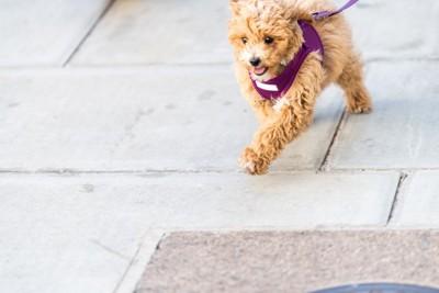石畳の上を歩く犬