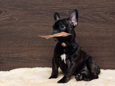 お札をくわえる黒い犬