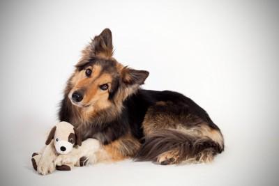 ぬいぐるみを足の間に入れる犬