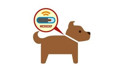 犬にマイクロチップを装着するイラスト