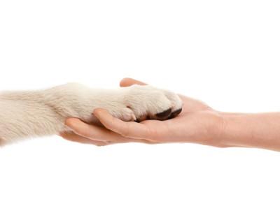 取り合う犬と人の手