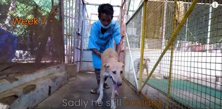 7週間後の犬の様子