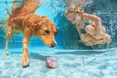 水中に潜って貝を見る犬と少女