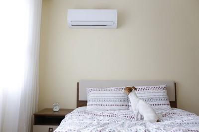 エアコンを見ている犬