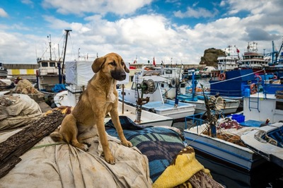 船の上の犬