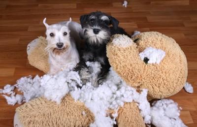 大きなぬいぐるみを破壊した2匹の犬