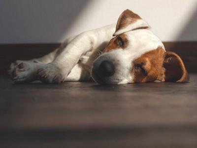 丸まって寝ている子犬