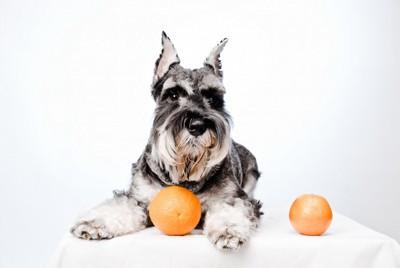 オレンジと伏せの姿勢の犬