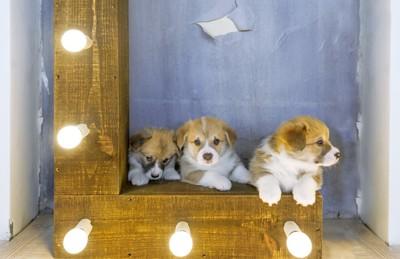 子犬とライト