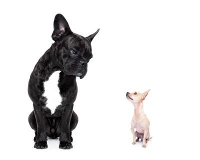 見つめ合っている大きな犬と小さな犬