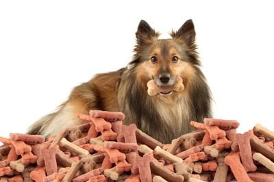 骨型のドッグフードと犬