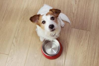 空のお皿の前でこちらを見上げる犬