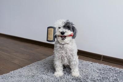ブラシをくわえている犬