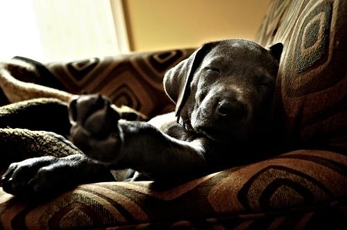 いつか私の上でもこんな風に寝てくれますように♪