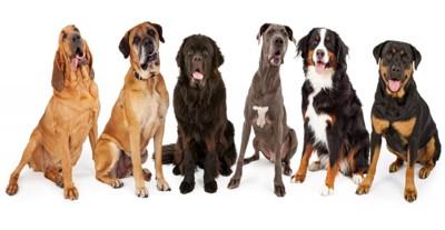 超大型犬種6頭