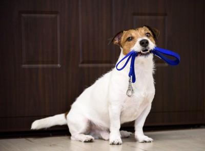 リードを咥えた犬