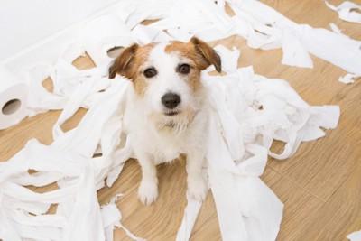 トイレットペーパーでイタズラした犬