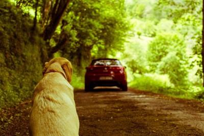 車で出かけた飼い主さんを後ろから見つめている犬
