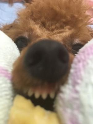 愛犬の変顔写真17枚目