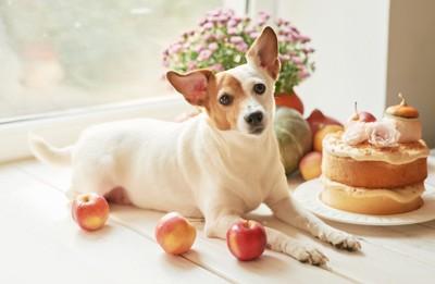 リンゴとケーキと犬