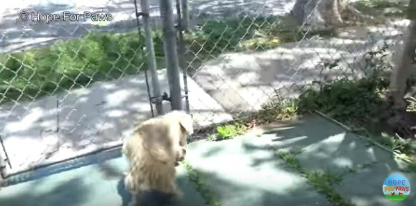 フェンスの外に逃げようとする犬