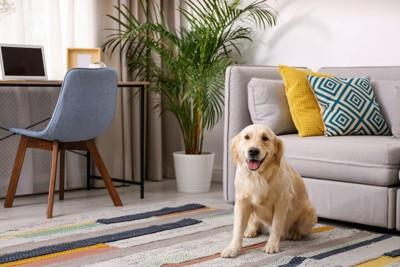 部屋の中でカーペットの上に座る犬