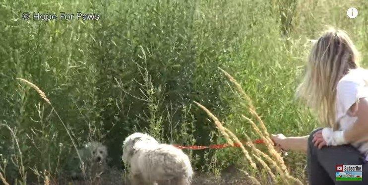 犬の親子対面