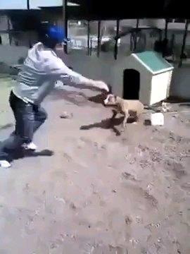 手を広げる男性と犬