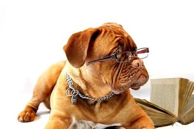メガネをかけたマスチフ