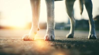 アスファルトの上に立つ犬の足